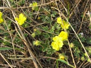 Tavaszi pimpo 3